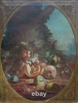 GRANDE & MAGNIFIQUE TOILE XVIIe XVIIIe. RARE & LUMINEUSE COMPOSITION DE FRUITS