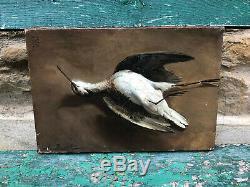 Huile Sur Toile XIX ème Oiseau Nature Morte HST Antique French Painting Bird